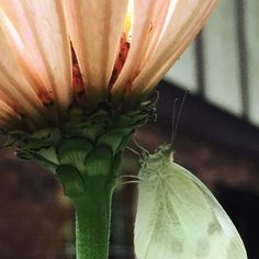 Zinnia and moth by @itsnevertoolatewolfe  my husband and adventure partner. Follow him for more beautiful pics from our asheville life. regram by leewolfepottery