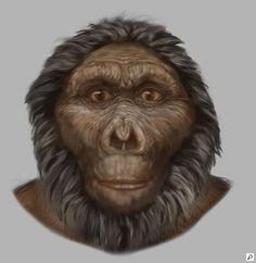 Paranthropus boisei
