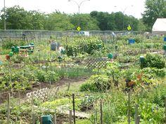 Jardin Communautaire de Montréal. Architecture, Vineyard, Plants, Photos, Outdoor, Gardens, Arquitetura, Outdoors, Pictures