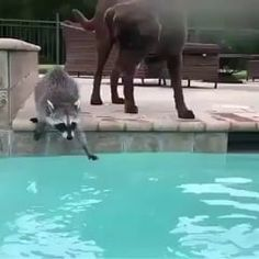 When you go to the pool with your short friend