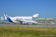 Airbus A300-600 F-GSTA Beluga n° 1 Supertransporter - Airbus Transport International. | Flickr - Photo Sharing!