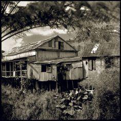 haciendas cafetaleras de puerto rico | ... en Blanco y Negro  Haciendas cafetaleras de Puerto Rico, 1987-1990