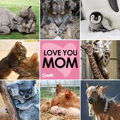 Happy Mother's Day to all of you wonderful mamas! This is too cute!