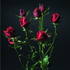 Scarlett #RosesColombia #RedilRoses #ColombianFlowers #Roses #BlomFlores #Regalos