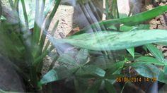 sammakko lehdellä