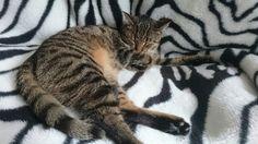 Śpiąca królewna :-)