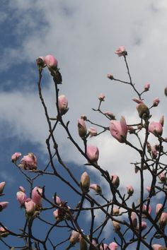 spring- steel magnolias ;) YES I CAN!!