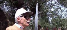 Επίδειξη κλαδέματος ελιάς από Ιταλό καθηγητή (Βίντεο) Panama Hat, Panama