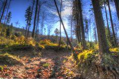 błękitny las