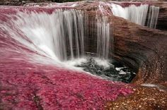 Travel: Caño Cristales, Colombia