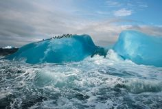 South Sandwich Islands...Refuge for birds and seals
