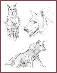 Wolf Sketches