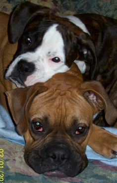 There's nothing like having a boxer...or two