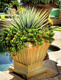 Outdoor planters....how striking!