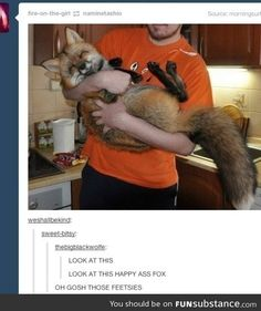 This is our collection of best animal memes of the week. Here these animal memes will make you laugh out loud. Cute Little Animals, Cute Funny Animals, Funny Cute, Funny Pics, Hilarious, Funny Animal Memes, Funny Animal Pictures, Funny Memes, Fox Memes
