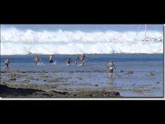 ▶ Thailand Tsunami 2004 - YouTube