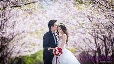 Cherry Blossom in Toronto Cherry Blooms, Bride Hairstyles, Photo Poses, Photo Studio, Engagement Photos, Wedding Photos, Sweet Couples, Wedding Dresses, Toronto
