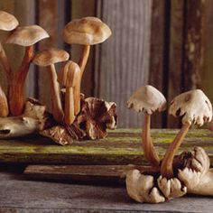 Carved Wooden Mushrooms  I have one of these and it's beautiful