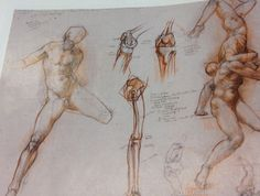 Sketches of Leg and muscles