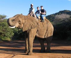 Rode an Elephant.. New Orleans Zoo