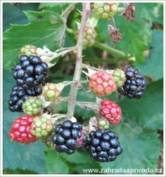 Gardening, Fruit, Food, Syrup, Lawn And Garden, Essen, Meals, Yemek, Eten