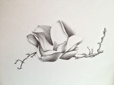 magnolia flower tattoo drawing | dromhch.top