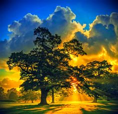 Nature's Masterpieces: Sunrise behind a tree