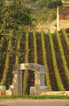 Vines 102: More Burgundy Wine.  www.butterfield.com/blog/2013/02/27/vines-102-burgundy/  #travel #wine #guide #holiday #destination #trip #myBNR