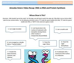 Worksheets Dna And Rna Worksheet Answers amino acids congas and compare contrast on pinterest dna vs rna protein synthesis handout made by the amoeba sisters click to