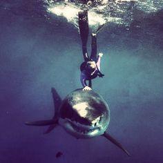 A shark in Miami.
