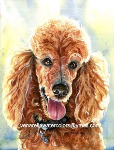 Apricot Red Standard Poodle Portrait 16x12 Giclee Print on watercolor paper mounted on white mat ready to slip into a standard 20x16 frame