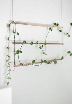 Balcony garden Vines - DIY An Indoor Trellis for Climbing Vines. Balcony garden V Indoor Climbing Plants, Climbing Vines, Indoor Plants, Indoor Flowers, Wall Trellis, Vine Trellis, Plant Trellis, Garden Trellis, Creta