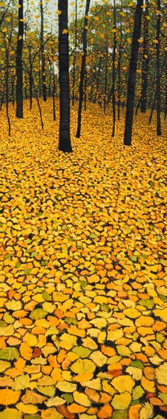a covering of yellow leaves falling from the trees