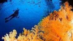 Go scuba diving in Fiji