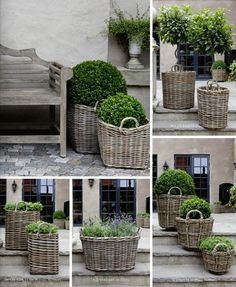 Dove grey wicker baskets with topiary plants and boxwood . Container Plants, Container Gardening, Urban Gardening, Garden Cottage, Farmhouse Garden, Garden Planters, Basket Planters, Boxwood Planters, Boxwood Shrub