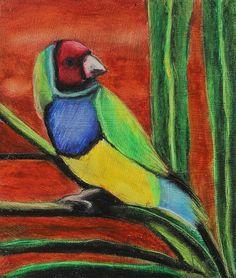 Gouldian Finch - Jeanne Fische #finch #wildlife #bird
