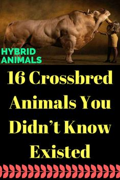 bd06c93d1fd5 16 Crossbred Animals You Didn t Know Existed  animals  pets  crossbred  Animal