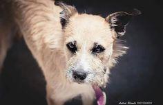 El sabor de tu alma - antua blonde photography -  fotógrafo solidario - barcelona - animal - fotos - reportajes - animal de compañía - maresme - cat - gat - gato - dog - gos - perro