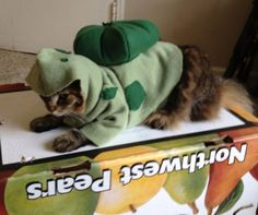 Would be perf for Callie Completely Custom Handmade Cat Or Dog Costumes by KandiKreation $50.00 & Charmander Pokemon Dog Costume - Etsy - Made to order ...