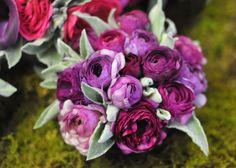 purple ranunculus with 'dusty' greenery