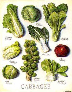 Fruits and Vegetables - John Burgoyne Studio Botanical Drawings, Botanical Illustration, Botanical Prints, Fruit Illustration, Fruit And Veg, Fruits And Vegetables, Veggies, Creative Food Art, Home Garden Plants