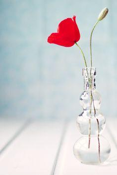 Flower  {juliadavila}