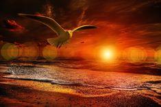 Beach, Beach, Gull, Bird, Fly, Sea, Coast #beach, #beach, #gull, #bird, #fly, #sea, #coast