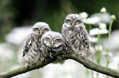 Three of a kind - Michel Verhoeven