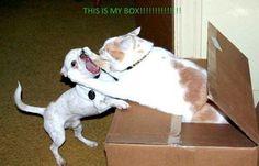 Oh My Freaking Stars!: Kitties & Boxes