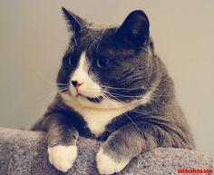 Girls Love Fat Cats - http://cutecatshq.com/cats/girls-love-fat-cats/