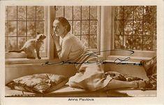 Pavlova and kitten