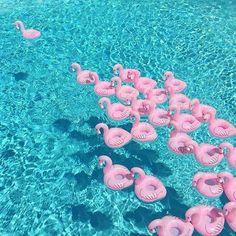 flamingo floaties