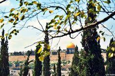 ~# Dome Of The Rock, Palestine, Jerusalem, Heart, Hearts