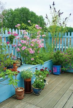 Container gardening is a perfect way of injecting more colour and interest into a small garden, balcony or terrace. Garden designer Noel Kingsbury explains how to make creative displays with containers Small Space Gardening, Garden Spaces, Small Gardens, Outdoor Gardens, Garden Plants, Balcony Gardening, Indoor Gardening, Garden Landscaping, House Plants